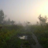 утро туманное... :: Светлана Моисеева