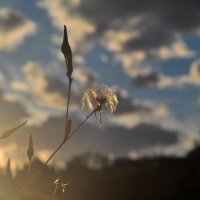 Софиты для сорняка :: Albina