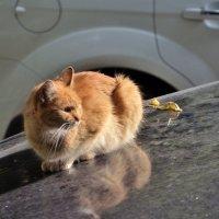 Дворовый кот :: Александр Юдин