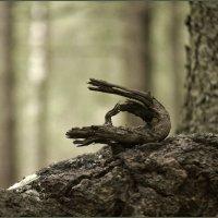 Дракон. :: сергей лебедев