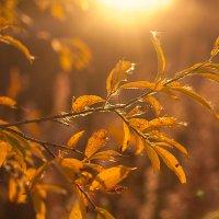 Осень... :: Оксана Червинская