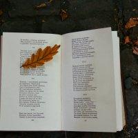 Осеннее чтение :: Света Кондрашова