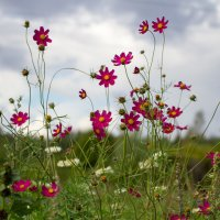 Цветы сентября :: Валентина Ломакина
