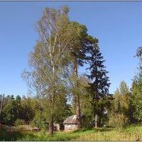 У леса,на опушке. :: Роланд Дубровский