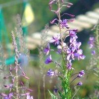 цветы в горах :: dila *
