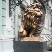 Львы :: Ирина Яздан Мехр