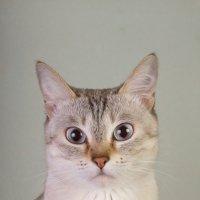 Я кошка-фотомодель! :: Natalia Petrenko