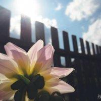 цветок :: Александра Тетерина