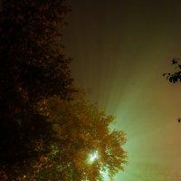 Туманным вечером... :: Дмитрий Костоусов