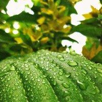 После дождя :: Анна
