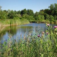 Природа лета, ветерок, тепло счастливого июля... :: Елена Ярова