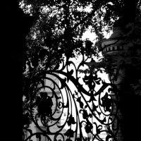 Решетка Михайловского сада :: Юлия Зеленкова