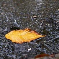 Сентябрьский дождь :: НикЛеод
