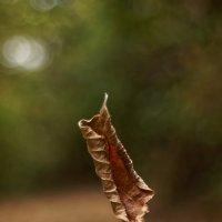 Осень :: Василий Малыш