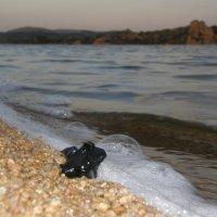 Вечер на озере :: Андрей