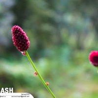 «Стильная» трава :: Son Eun Kuyol