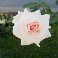 Роза Святогорья 2 :: Викторина Срыбна