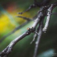 Летние краски :: Маргарита Б.