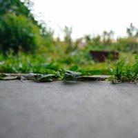 пока трава ещё зелёная :: Света Кондрашова