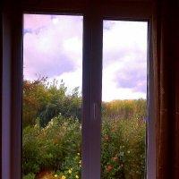 Зеленый мир в окне :: Елена *