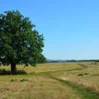 Одинокое дерево :: Павел Trump