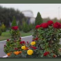 Осенние цветы, вы  ярки и красивы... :: Людмила Богданова (Скачко)