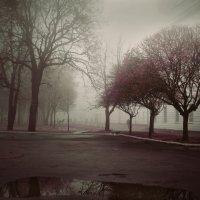 Туман :: Hanna Mars