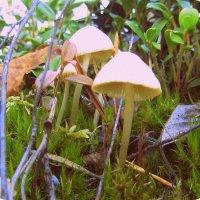 Непонятный гриб лесной.. :: Галина Полина