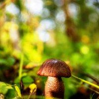 Ну вот, и мы сходили за грибами. :: Андрей Качин