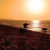 Рассвет над морем v.3 :: Олег Зак