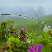 Дождливый день :: Валерий Талашов