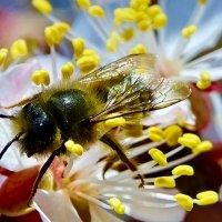Абрикосовый нектар ....!!! :: Серёжа Стрельников