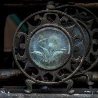 античная роза :: Александр