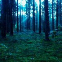 Утро в лесу :: Evgenij Schleinikov
