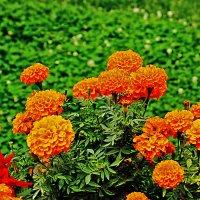 Сентябрьские цветы :: Светлана