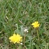 А говорят, что осень наступила ... А вдруг это весна в сентябре? :: Galina194701