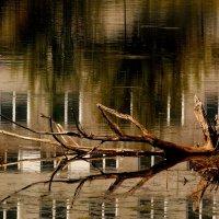 дерево-вода-камень :: Александр Прокудин