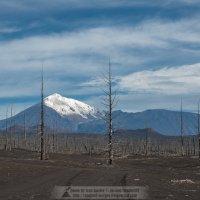 Мертвый лес :: Ivan Kozlov