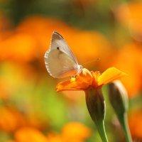 В цветочном раю :: Владимир Марков