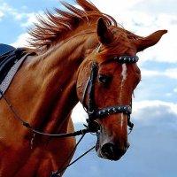 Лошади мчались, скакали,неслись.. :: Тамара Бучарская