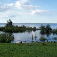 Речка Сытке впадает в море :: Елена Павлова (Смолова)