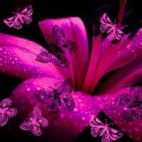 Лилия и бабочки :: Victoria