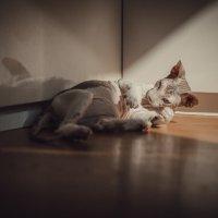 кошки :: Анна Вязьмина-Кирилюк