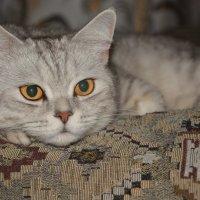 Без кота никуда :: Александр Швецов