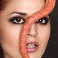 snake :: Sandra Snow