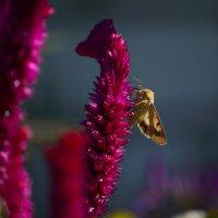 Сбор нектара :: Геннадий Катышев