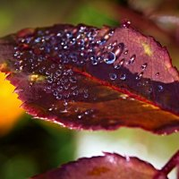 Осенний жемчуг :: Константин