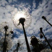 Солнечное притяжение :: 4uika (Алла) Тарасова