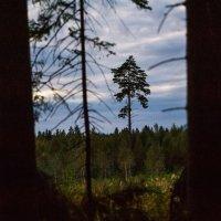 Взгляд лесоруба :: Андрей Куприянов