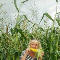 люблю я кукурузку :: Элла Перелыгина